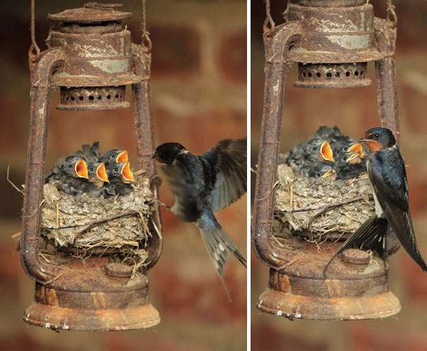 bird-nests-unusual-places-1__605