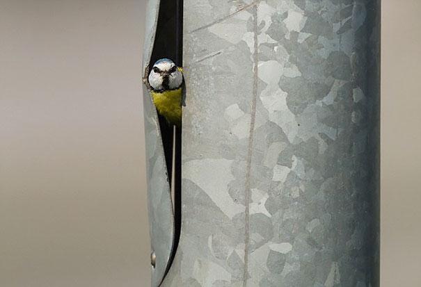 bird-nests-unusual-places-21__605
