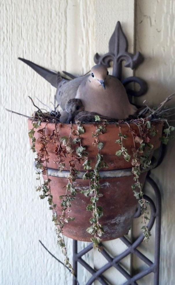 bird-nests-unusual-places-31__605