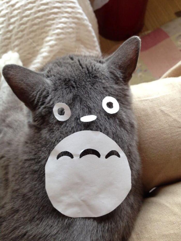 養貓遜掉了!4張紙就能進化「龍貓」 灰的也太像啦~
