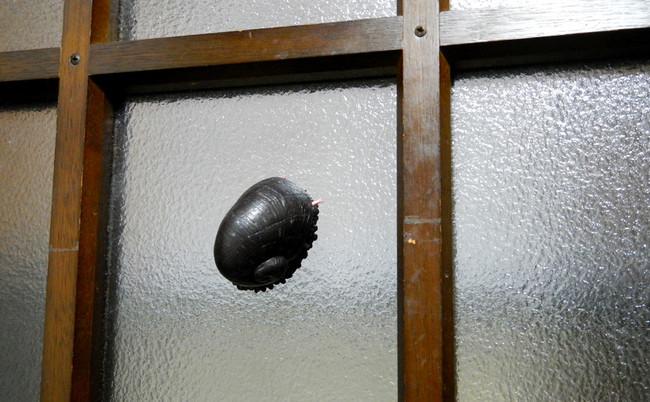 他是隻蝸牛!重複一次,他是隻美軍都要欽佩研究的超強鋼鐵蝸牛!