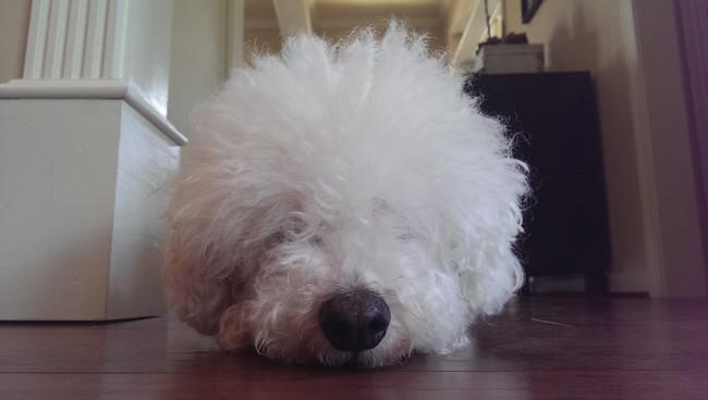 22隻其實可以上「超級明星臉」的超像其他東西的狗狗。