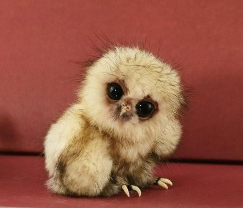 22隻連哈利波特都會跟你搶著要的可愛貓頭鷹寶寶!