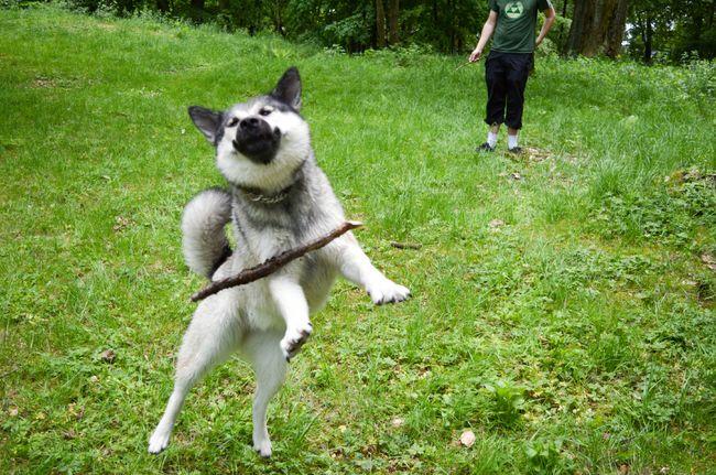17隻根本沒有被遺傳到運動細胞的超狼狽爆笑狗狗。