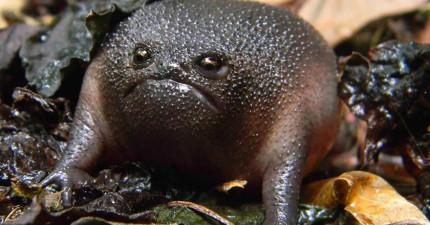 20隻最奇特奧妙的青蛙蟾蜍,只恨生物課從沒好好教過我們啊!