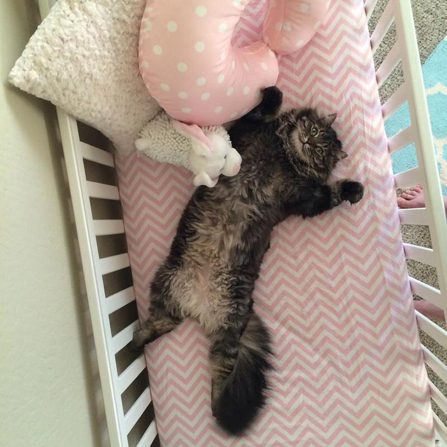 新手爸媽開心做了嬰兒床 貓咪直接躺進去:朕幫忙試用
