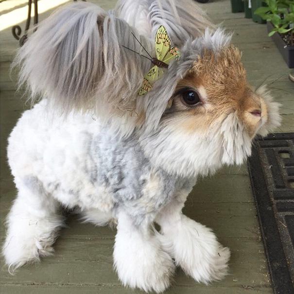 11張完全可愛到讓人放聲尖叫的長毛兔照片,早上給隔壁同事看結果害我耳鳴到現在。