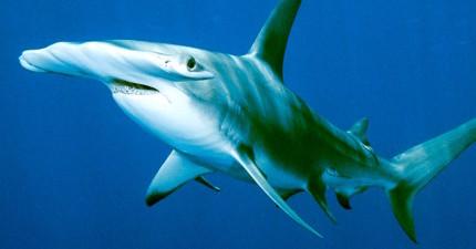 美國漁夫不小心捕獲一隻鯊魚,剖屍後發現令人心痛的事實讓他懊悔不已!
