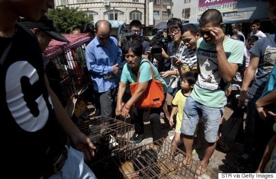 中國狗肉節當天有個大媽一口氣買了100隻狗,她真正的動機一定會讓你雞皮疙瘩。