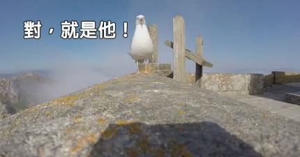 海鷗把攝影機A走,結果拍下了最美的景色。
