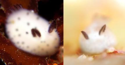 我知道你在想什麼,但這種超可愛的毛茸茸動物「真的不是小白兔」啊!