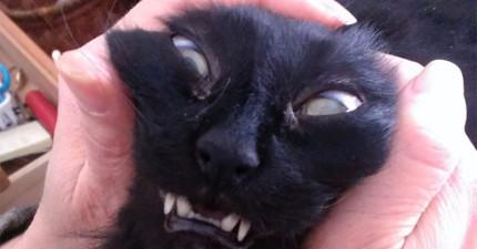 14隻被前置鏡頭正好拍到不好角度的「我本來很上相」貓咪。