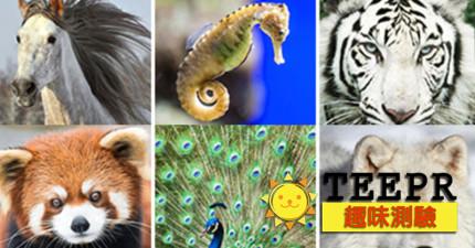 8個問題測出你的靈魂最像哪種「異國珍奇動物」!