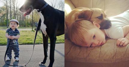 24隻應該要榮獲「年度最佳狗保姆獎」的超萌玩伴狗狗。
