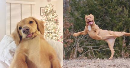 15隻「天生就這樣可愛不是要你可憐他們的」可愛秒殺狗狗。