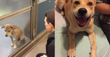 16隻剛剛離開收容所被領養的狗狗,他們一出門的反應會讓你看得超開心!