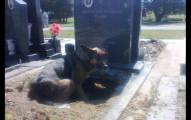 網友都以為「狗狗趴在墓地思念主人」而感動不已,後來卻發現令人超開心的真相!