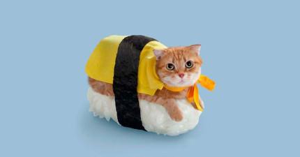 日本壽司師傅會「以貌取人」替食客設計不同餐點嗎?派遣3位裝扮差很大的人來實地測驗!
