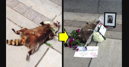 政府一直不處理掉路上的浣熊屍體,於是一連串盛大的「浣熊追思會」就展開了...!
