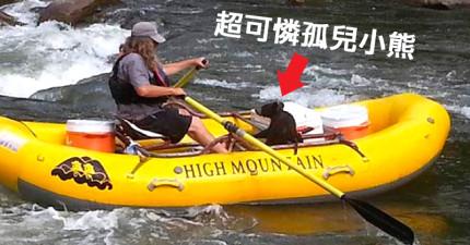 他們在河岸發現徘徊4天快餓死的孤兒小熊,結果小熊就直直朝他們遊過來要搭船...