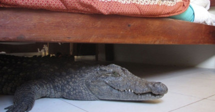 7個曾經有人在床底下發現的驚悚東西。#7找到前男友到底是什麼鬼啦!