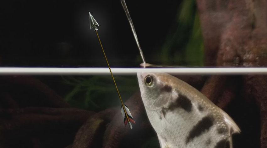 這條「弓箭手魚」從嘴裡會射出水弓箭把陸地上的動物擊落然後吃掉。