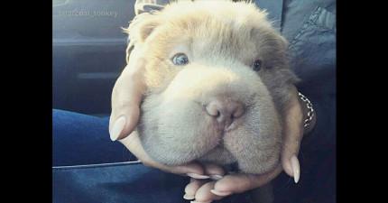 10個理由證明,這隻狗狗是「世界上最萌的可愛狗教主」!