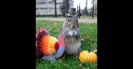 這名學生跟校園的小松鼠變成了好友後,每次一到節日時就會幫他們打扮。