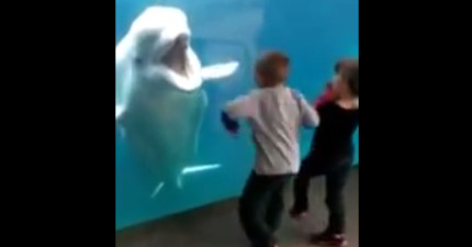 這些小朋友只是想近看白鯨,沒想到白鯨轉過頭後的反應讓他們驚喜尖叫連連!
