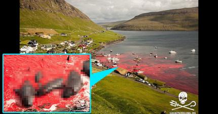 這裡的海灘每年都會變成鮮紅色,原因可能會讓你憤怒到吃不下飯...