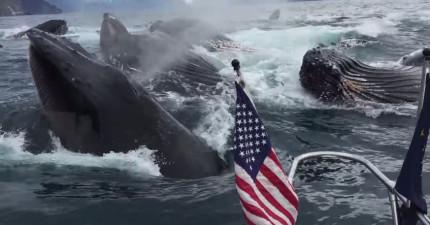 這個男生本來只希望可以目擊一條鯨魚的蹤影就心滿意足了,結果忽然他船邊忽然大震動...