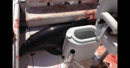 一家人在快艇上看見海豚本來很開心,結果下一秒海豚突然跳上船把太太雙腿撞斷...