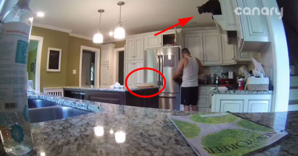 如果你需要證據證明貓咪很混帳的話,這個攝影機拍到的片段會100%說服你。