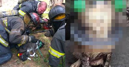 國外的消防隊超重視毛寶貝,看看他們的超可愛設備就知道了!