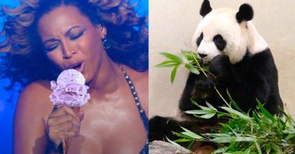 熊貓假懷孕