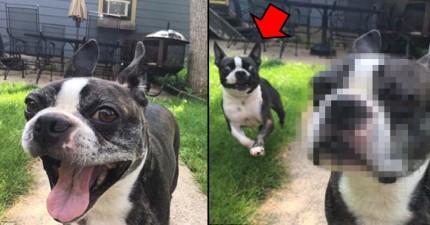 這隻狗狗在拍照時發現到蠢蛋弟弟從後面亂入,臉上馬上露出超不爽表情!