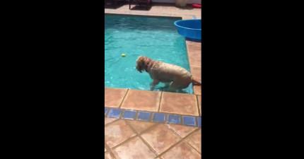 這隻狗狗不敢跳到泳池裡撿球,最後居然學會用人類的用具達成任務!