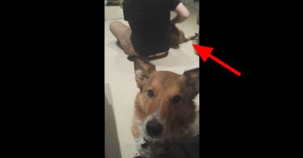 這隻狗狗很不滿意家裡有了新寵物,說的話讓我快笑死了!
