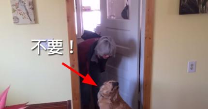 這隻狗狗跟貓咪一樣覺得人類是奴才,一直不讓他主人親他的模樣把我給笑死了!