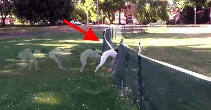 狗狗往前衝「不小心展現出的100分前空翻」讓主人和全網路全都笑死了!