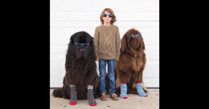 媽媽拍下了兒子、兩隻巨狗狗和一匹馬的最動人友情。