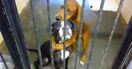 這兩隻小狗因為「一個擁抱」而救了彼此一命!