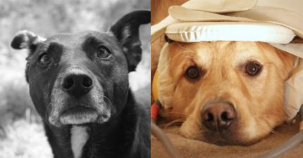 科學家證實:狗狗跟人類真的有種不可思議的連結。