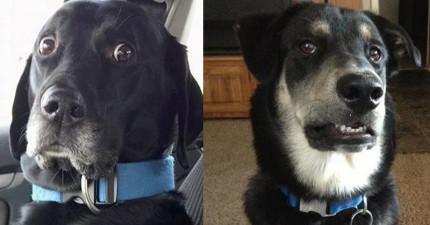 23隻用表情就可以跟你說故事的「奧斯卡最佳男女主角狗狗」。
