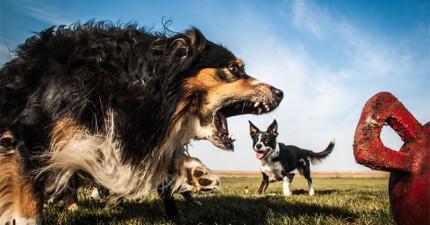 20隻可以一腳把你踩扁扁的完美錯位巨型可愛猛獸的狗狗。