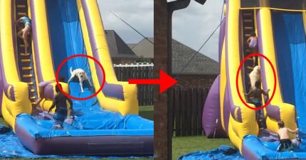 他們都很擔心狗狗滑下溜滑梯時會很怕,結果看到狗狗玩完後的反應,都發現太低估他了...