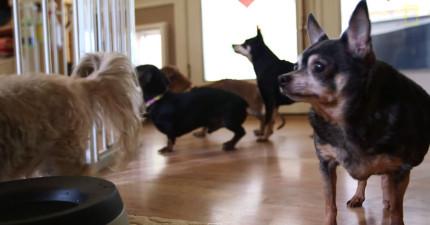 這個最感人的「狗狗養老院」就是一個讓世界變得更好的狗間天堂。