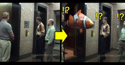 他們按了電梯準備下樓,結果電梯門一打開卻「游出了一條魚」!