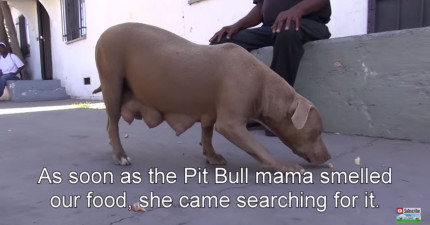 他們找到了脹奶母狗後,鑽到廢棄屋底下看到的景象就會讓你充滿喜悅!