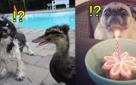 16隻「會被任何毫無殺傷力的東西嚇哭」的超膽小可愛狗狗!